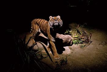 ITOZU YORU ZOO 〜夜の動物園〜